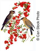 Firethorn Stock Illustrations. 4 Firethorn clip art images and.