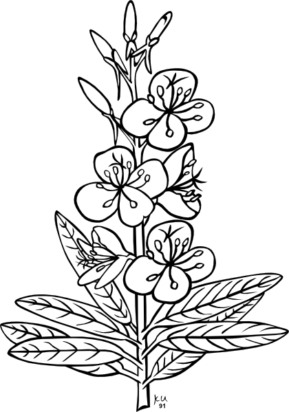 Fireweed Plant Clip Art at Clker.com.