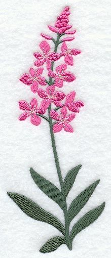 Fireweed Clipart.