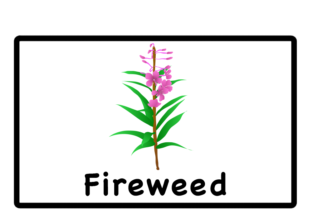 Gallery For > Alaska Fireweed Clipart.