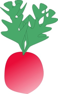 Vector radish for free download about (5) vector radish. sort by.