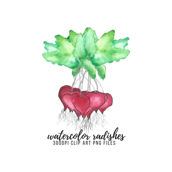 Radish Clip Art Radishes Leaves Watercolor Love Hearts Vegetables.