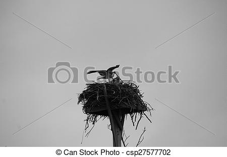 Stock Fotografie von neblig, nest, Fischadler, Morgen.