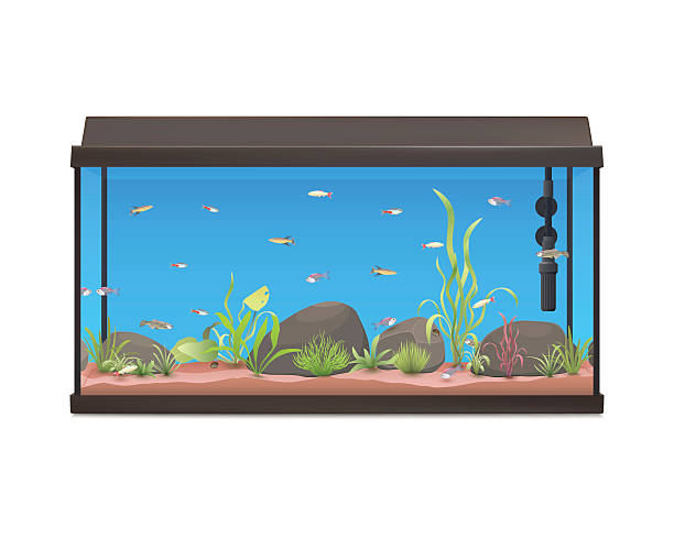 Best Fish Tank Illustrations, Royalty.