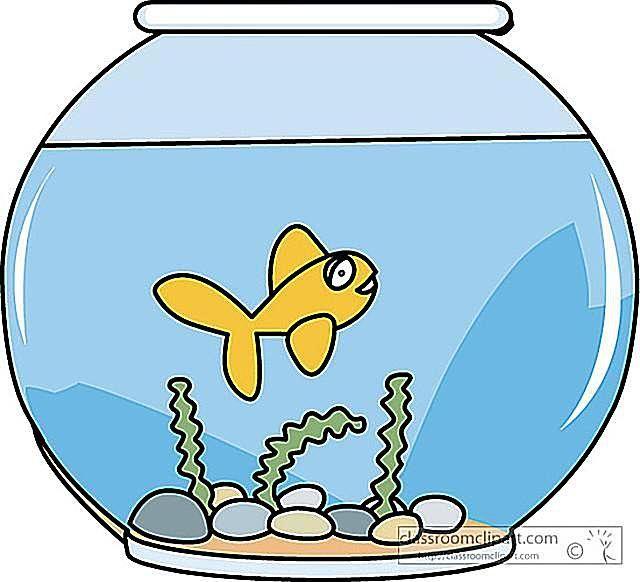 Fish bowl fish in clip art at clker vector image famclipart.
