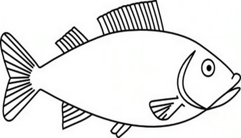 Outline Of Fish Clipart.