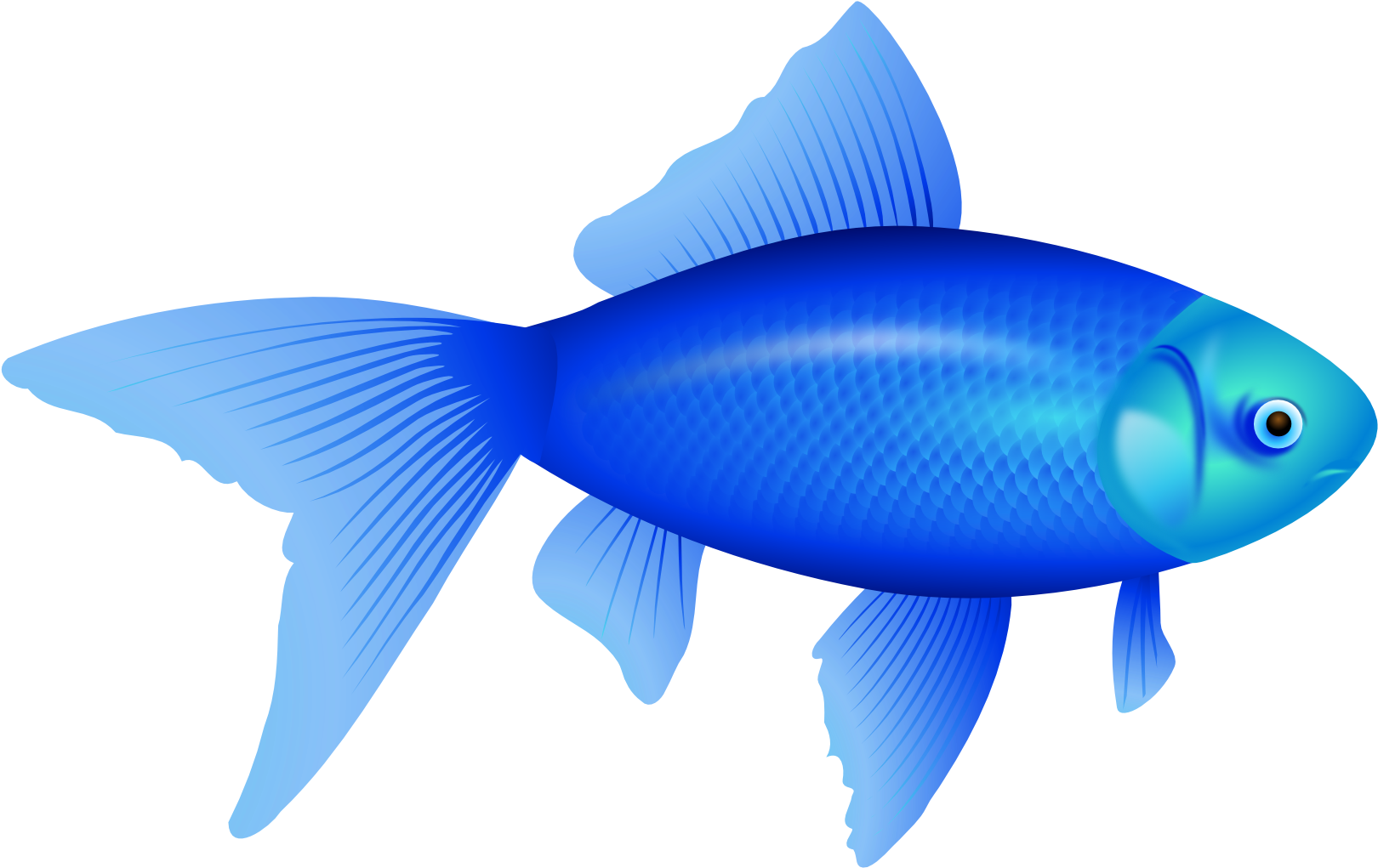 HD Biology Clipart Fish.