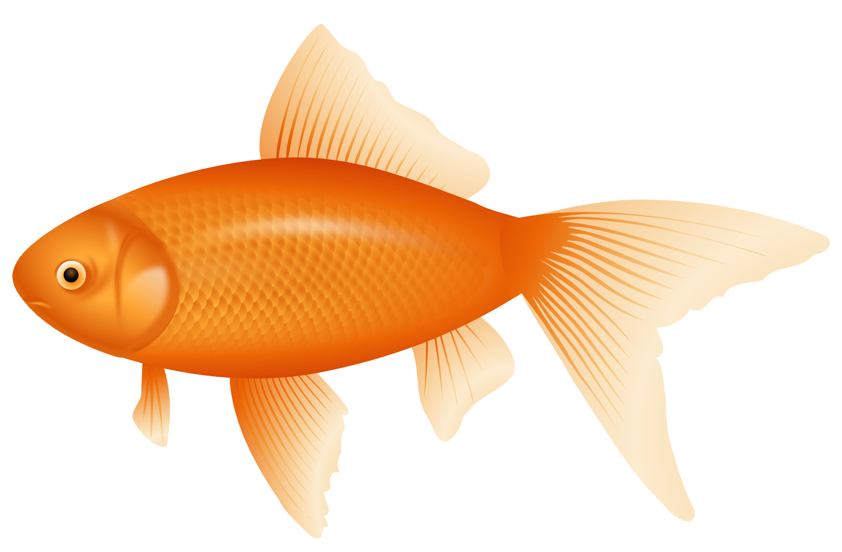 fish clipart transpare...