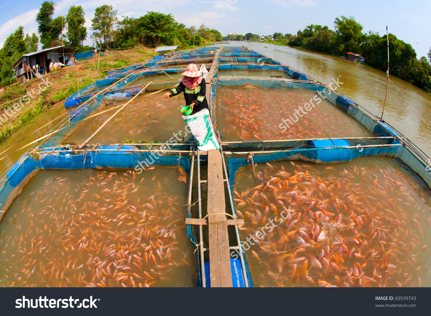 Fish Farm Located Thai Country Stock Photo 69539743.