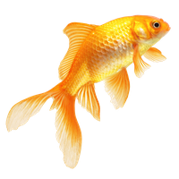 Download Fish Free PNG photo images and clipart.
