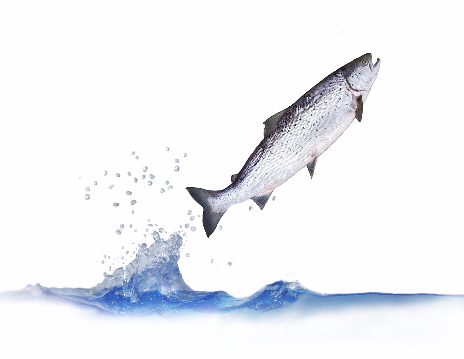 Download Free png Fish Jumping Out Of Water Png (99+ images in.