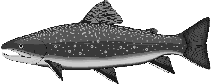 Clipart salmon fish.