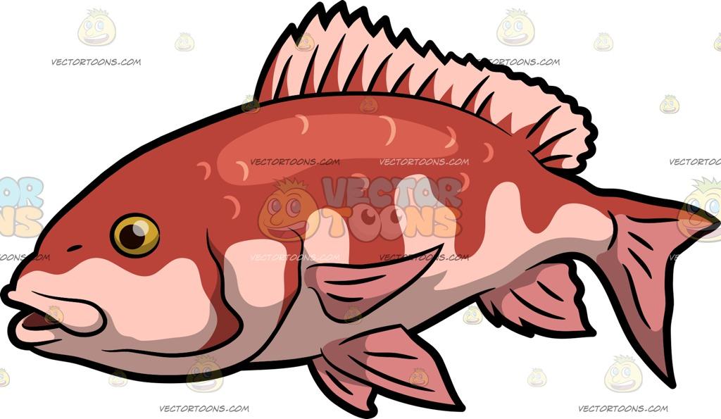 fish Cartoon Clipart.