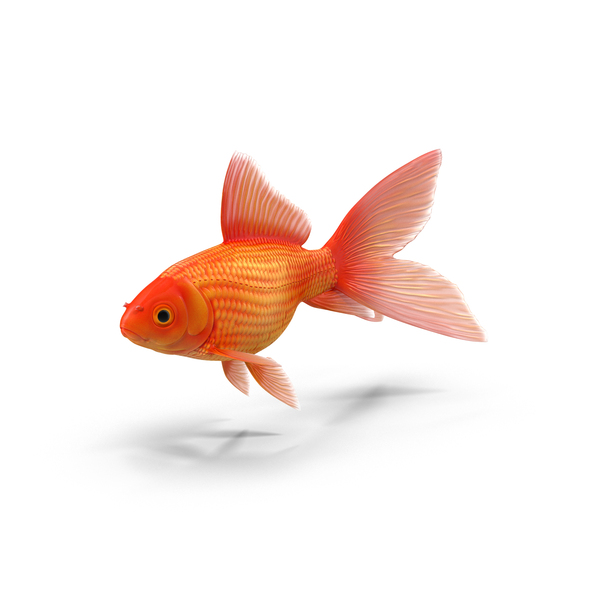 Fish PNG Images & PSDs for Download.