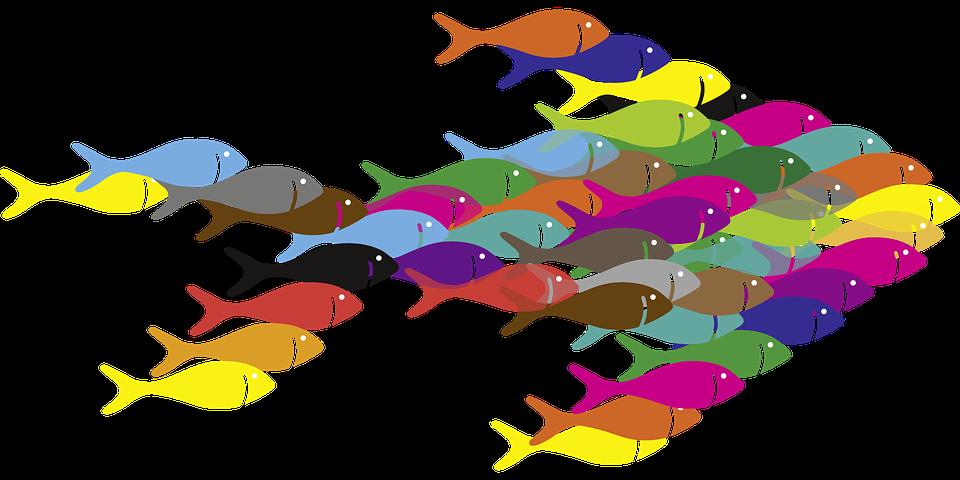 Fish, Swarm.