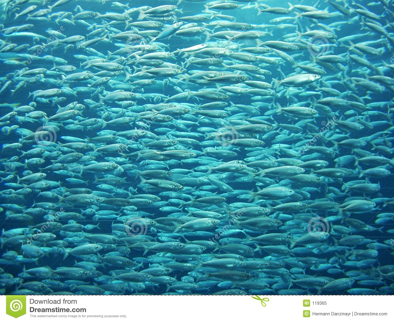Fish Swarm Royalty Free Stock Photo.