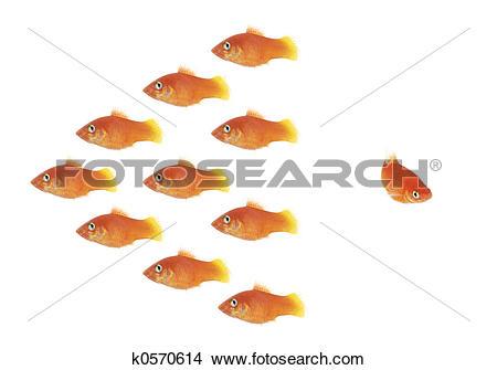 Stock Photo of Fish swarm k0570614.