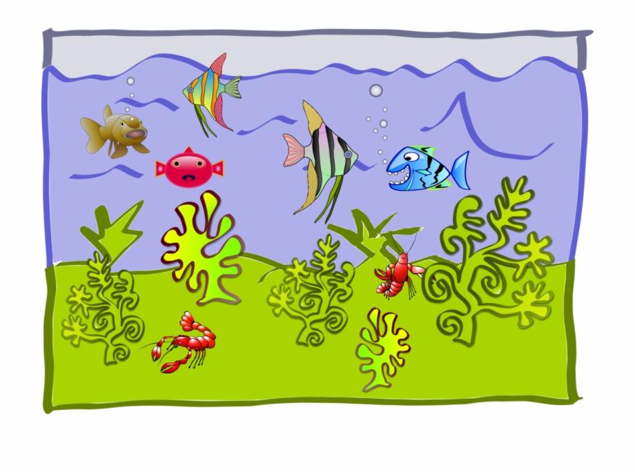 World Aquarium Goldfish Freshwater Angelfish.