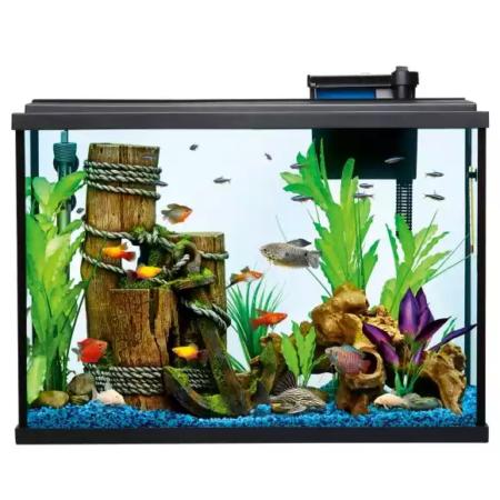 Aquarium,Freshwater aquarium,Aquarium decor,Feeder fish,Aquarium.