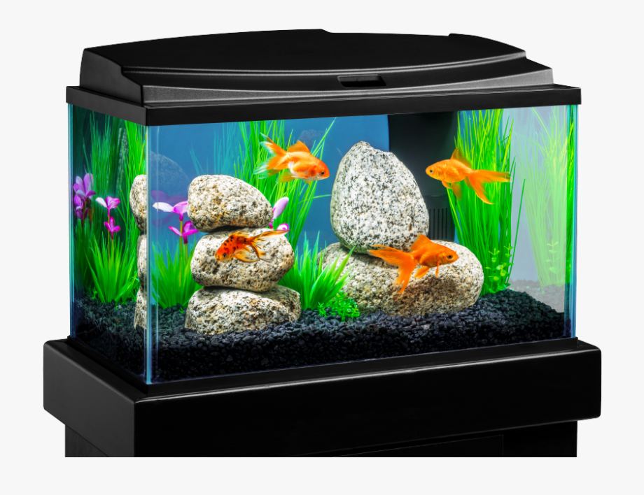 8 Gallon Fish Tank , Png Download.