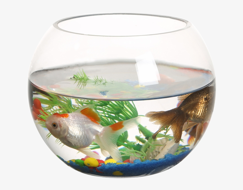 Ranfeng Small Fish Tank Transparent Round Fish Tank Transparent PNG.