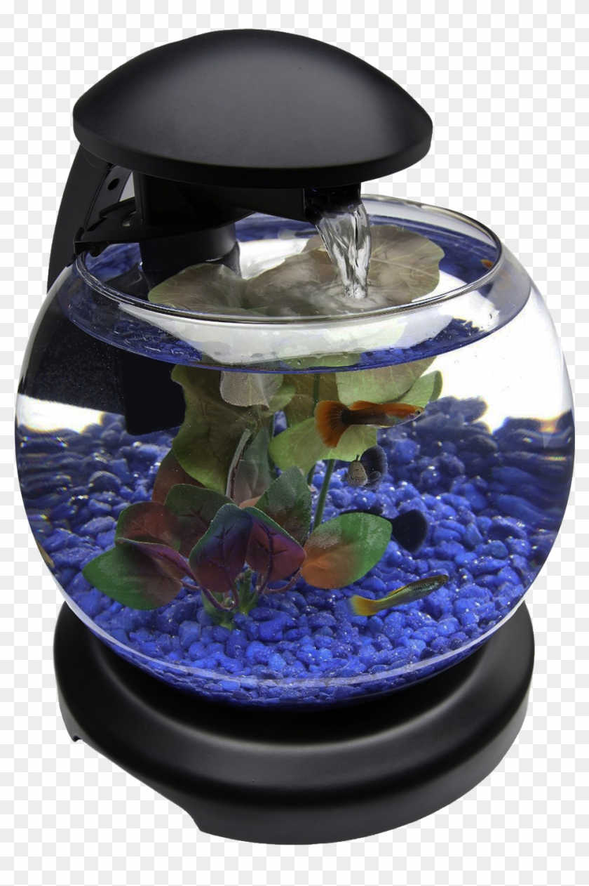 Glob Aquarium Fish Tank Png Transparent Image.