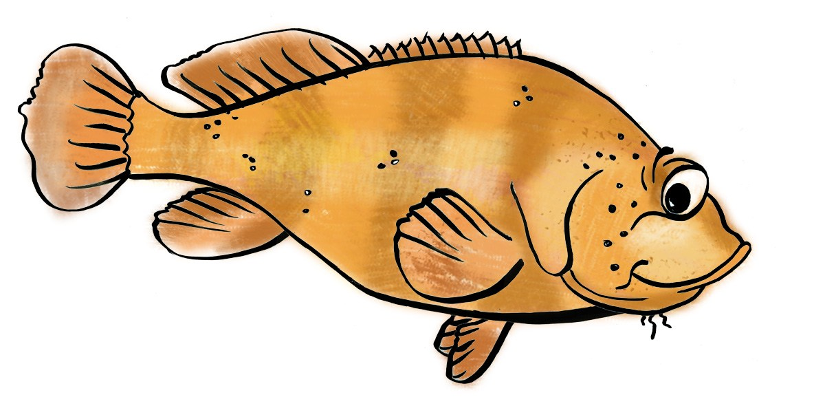 Fish to eat clipart 4 » Clipart Portal.