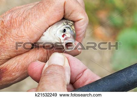 Stock Photograph of fisherman pulls out fish hook from fish's.