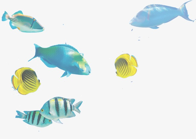 A Group Of Small Fish, Fish Clipart, Group, Ocean PNG Image and.