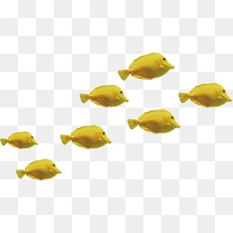 Group Of Fish Png & Free Group Of Fish.png Transparent Images #5653.