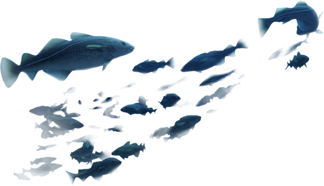 Fishes Png #95217.