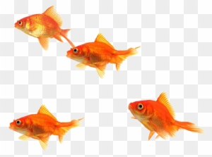 School Of Fish Png (93+ Images In Collec #242651.