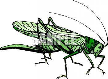 Locust.