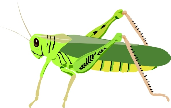 Grasshopper Locust clip art Free vector in Open office drawing svg.