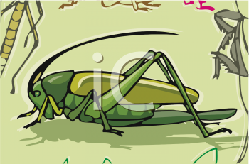 Grasshopper, Locust Or Cricket In Its Natural Environment.
