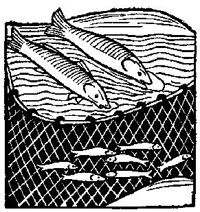Fishing net with fish clipart.
