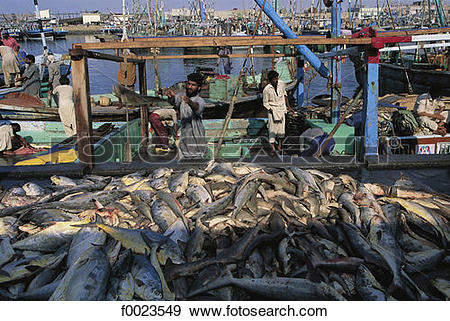 Stock Photograph of Pakistan, Sindh, Karachi, fishing port, return.