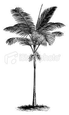 Palm Tree Date Palm Evergreen Plant Wall Decor Art Printable.