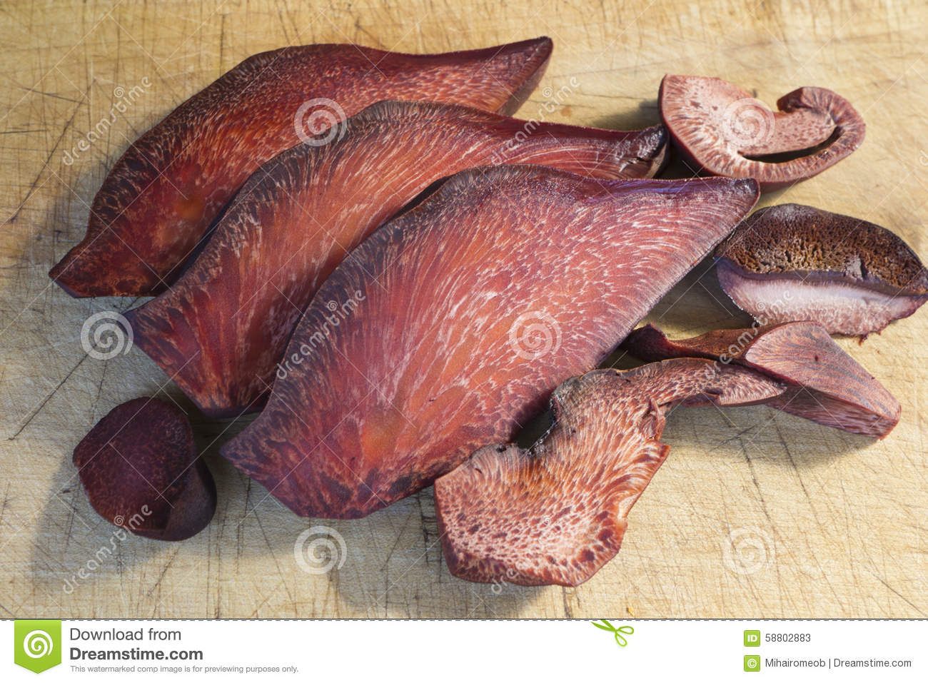 Fistulina Hepatica Fungus Stock Photo.