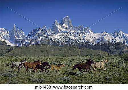 Pictures of Wild horses below Fitz Roy, Patagonia, Argentina.