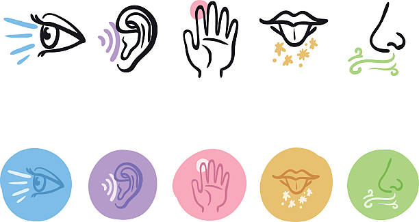 My 5 Senses Clipart.