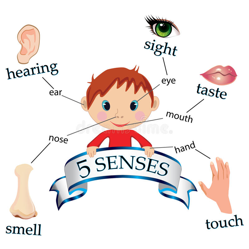 The five senses clipart 6 » Clipart Station.