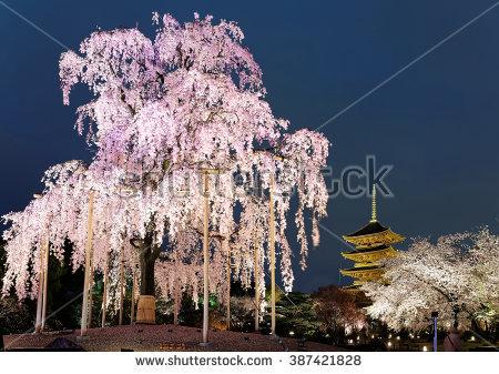Night View Famous Fivestory Pagoda Toji Stock Photo 387421828.