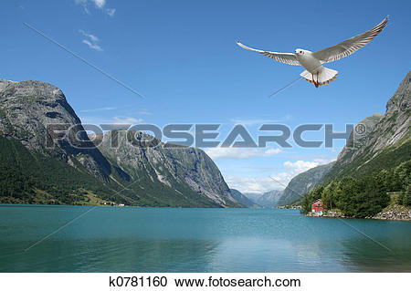 Stock Photography of flying seagull and norwegian fjords k0781160.