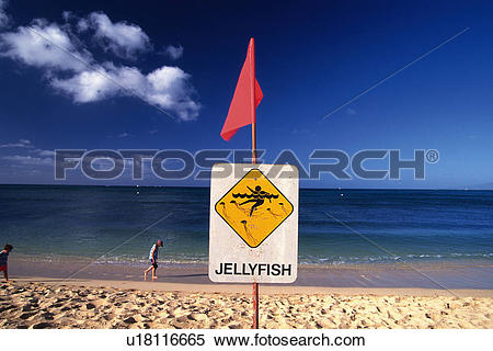 Stock Image of a Warning Sign of Jellyfish In the Middle of the.