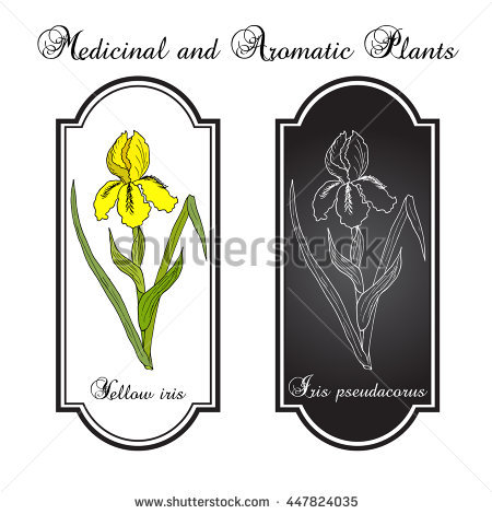 "water Flag Iris"" Stock Photos, Royalty."