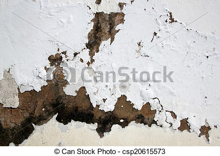Picture of Fungus and Flaking Paint due to Rising Damp.