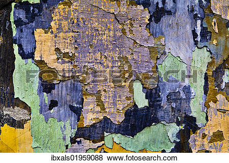 """Pictures of """"Facade with flaking paint, Krems, Lower Austria."""