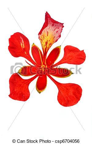 Flamboyant Images and Stock Photos. 3,017 Flamboyant photography.