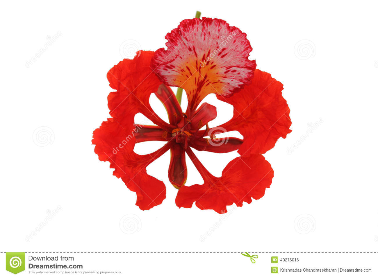 Tropical Flower Detail.